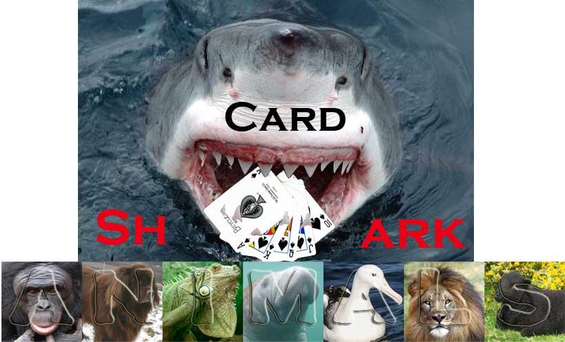 CardShark.jpg?psid=1